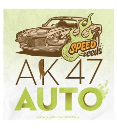 Ak 47 Auto 60 unds (Speed Seeds) Semilla Feminizada Autofloreciente 0