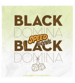 Black Domina x Black Domina 60 unds (Speed Seeds) 0