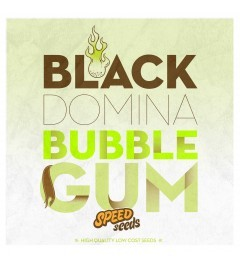 Black Domina x Bubble Gum 60 unds (Speed Seeds) 0