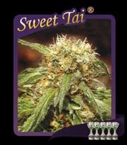 Sweet Tai  Feminizada (Sweet Seeds) 0