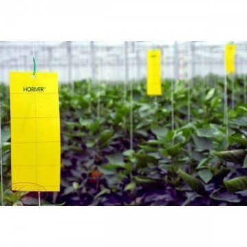 Trampas Adhesivas Amarillas anti plagas en el cultivo 1