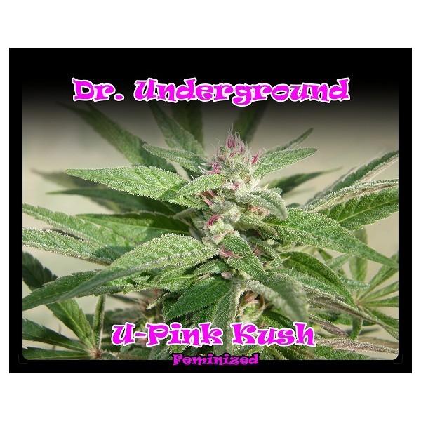 U-Pink Kush Feminizada (DR. Underground) 0