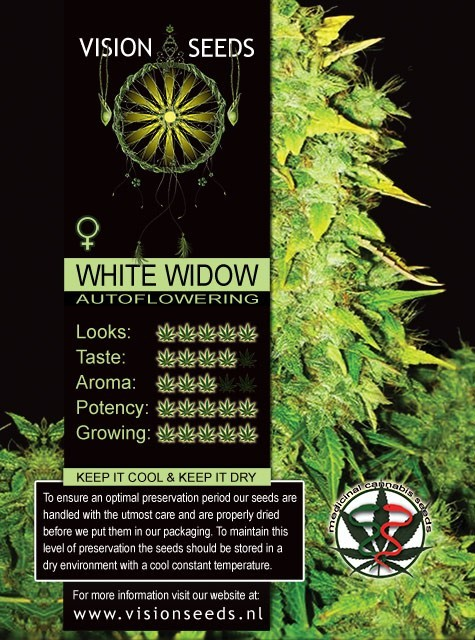 White Widow Auto Vision Seeds 2