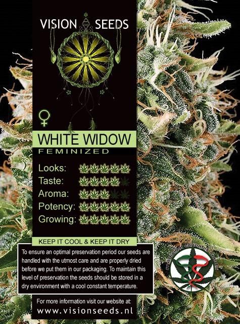 White Widow Semilla Feminizada de Marihuana 1