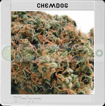 Chemdog #4 (Original Blimburn America Feminized)  0