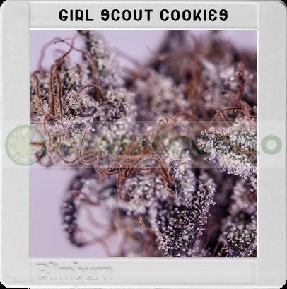 Girl Scout Cookies (Original Blimburn America Feminized) 3 Semillas 0