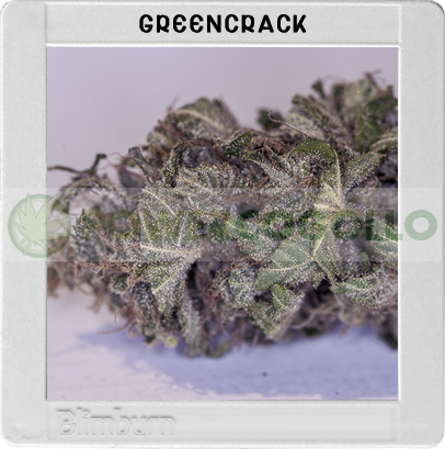 Green Crack (Original Blimburn America Feminized) 0