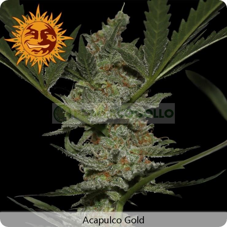 Acapulco Gold (Barney´s Farm) 0