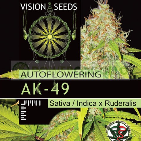 AK-49 (Vision Seeds) Semilla feminizada 1