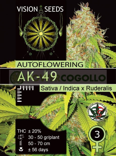 AK-49 Auto Vision Seeds  1