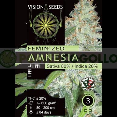 Amnesia (Vision Seeds), Semilla Feminizada 1