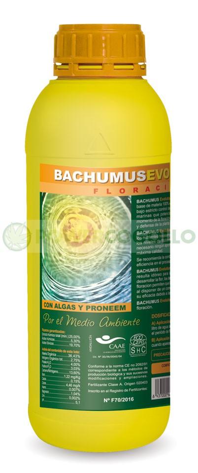 Bachumus Evolution Floración 0
