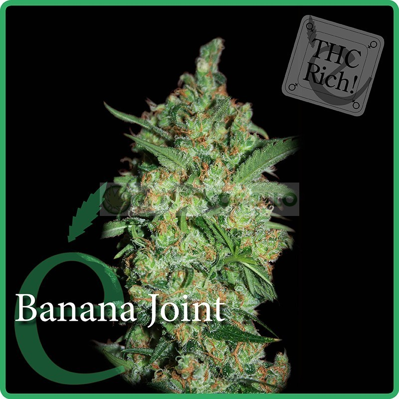 Banana Joint (Elite Seeds) Semilla Feminizada 2