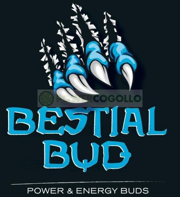 Bestial Bud Pk 54-34 Fin de floración 0