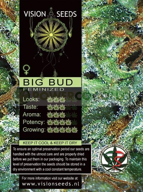 Big Bud semilla marihuana 1