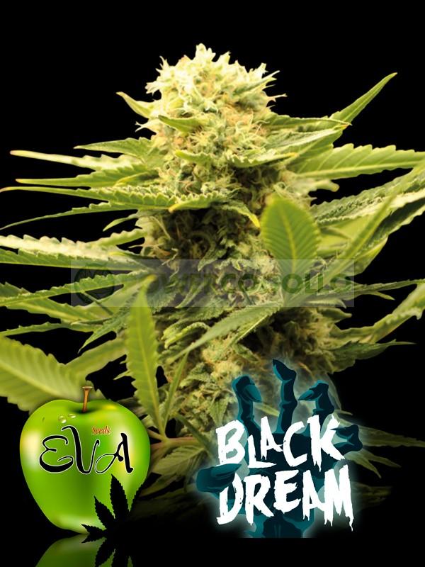 BLACK DREAM (EVA SEEDS) 0