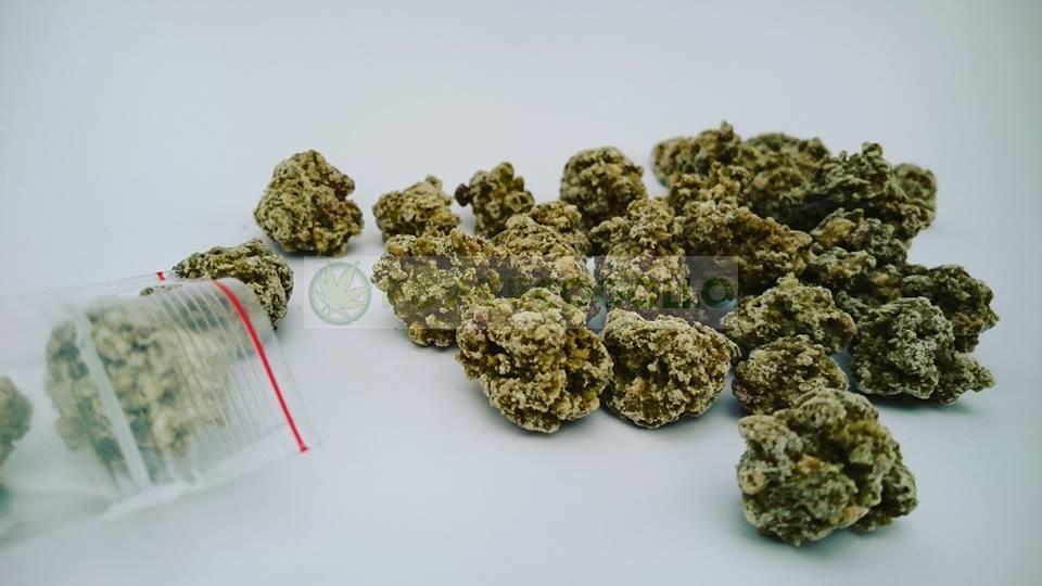Bombones OG Krunch Purple Pot 1