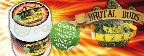 Brutal Buds especifico para la fase de floración 0