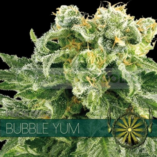 Bubble Yum Vision Seeds  2