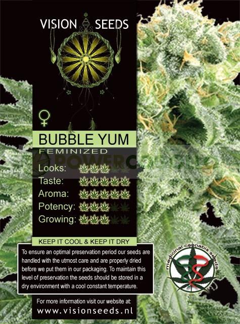 Bubble Yum Vision Seeds Semilla Feminizada de Marihuana 1