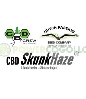 CBD Skunk Haze (Dutch Passion) Semilla Feminizada de Cannabis 1