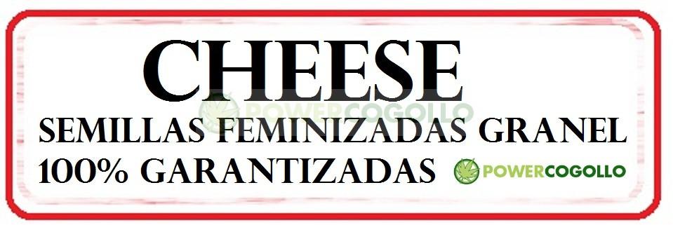 Cheese Semilla Feminizada 100% Granel 0