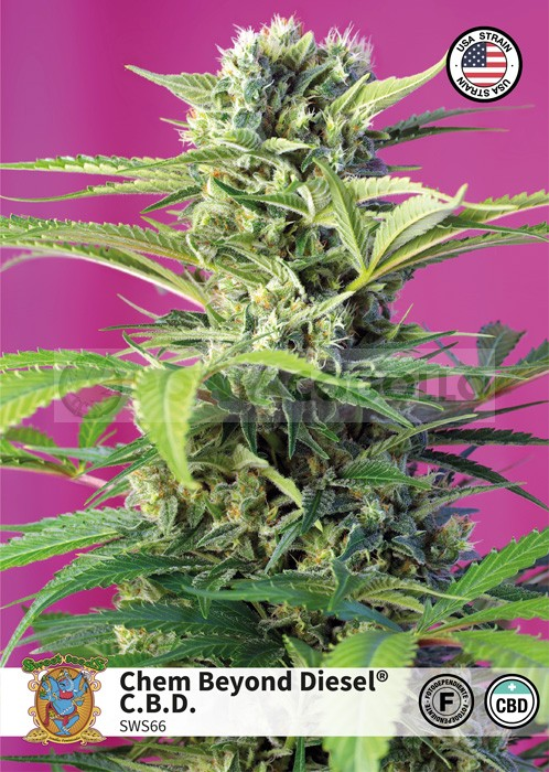Chem Beyond Diesel CBD (Sweet Seeds)-5 (Semillas) 0