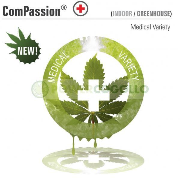 ComPassion (Dutch Passion) Semilla Feminizada de Cannabis 0