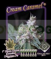 Cream Caramel (Sweet Seeds) Feminizada 0