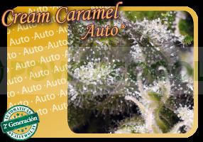 Cream Caramel Auto (Sweet Seeds) Feminizada  Cream Caramel Auto (Sweet Seeds) Semilla Feminizada versión Autofloreciente  Encuentra las mejores Semillas Feminizadas de Sweet Seeds en nuestros GrowShop Dr. Cogollo - PowerCogollo.com tu Grow más Barato  Nue 0