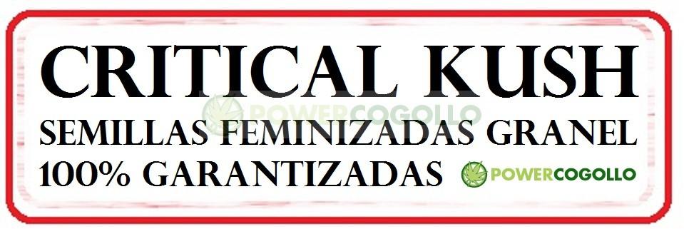 Critical Kush Feminizada 100% Granel 0