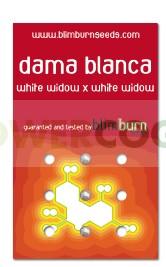 Dama Blanca (Blim Burn Seeds) 0