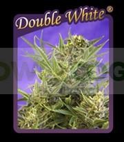 Double White 0