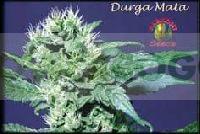Durga Mata Regular 0