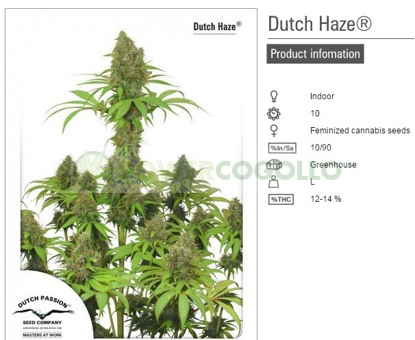 Dutch Haze (Dutch Passion Seeds) 2