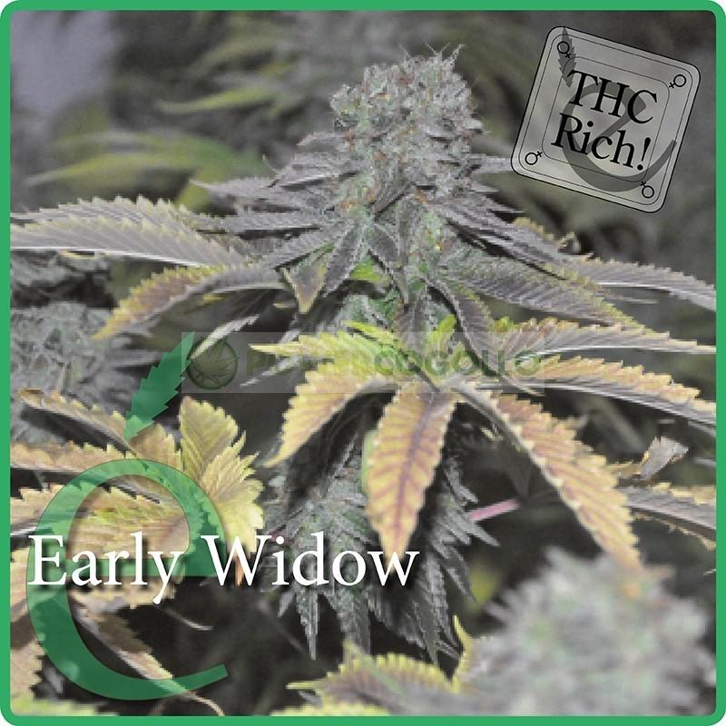 Early Widow (Elite Seeds) Semilla Feminizada 1