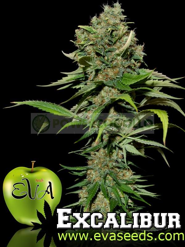 Excalibur (Eva Seeds) Semilla Feminizada de Cannabis 0
