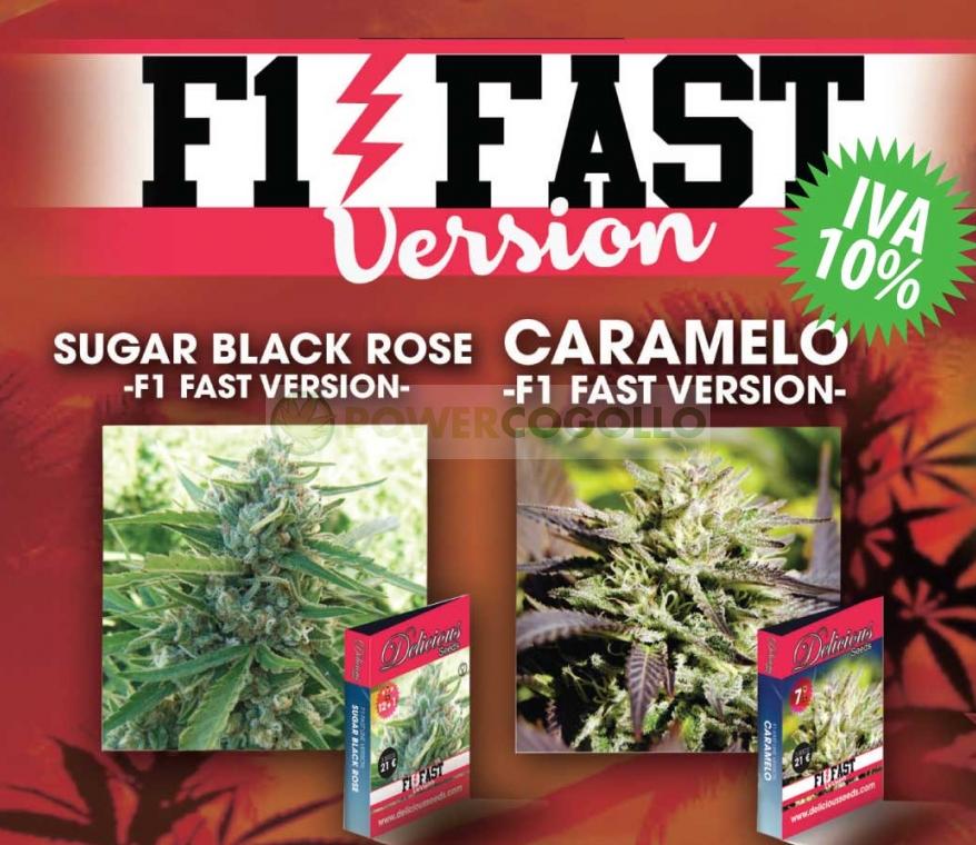 Caramelo F1 Fast Version- NOVEDAD Delicious seeds 1