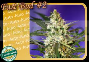 semilla feminizada Fast Bud #2 Autofloración 0