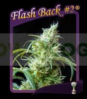 Flash Back #2 0