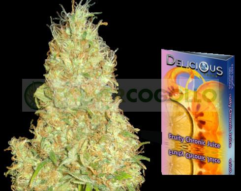 Fruity Chronic Juice (Delicious Seeds) Semilla de Cannabis Feminizada 0