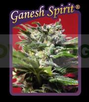 Ganesh Spirit  0