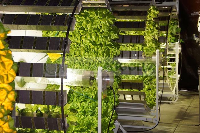 Gi Grow Noria Sistema de Cultivo 336 Plantas 3