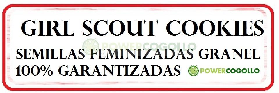 Girl Scout Cookies Semilla Feminizada 100% Granel 0