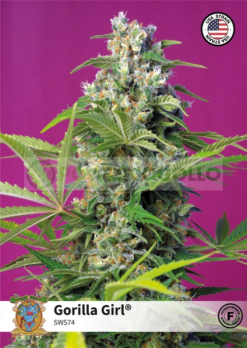 Gorilla Girl (Sweet Seeds)-5 (Semillas 0