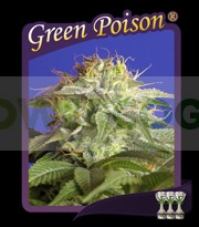 Green Poison (Sweet Seeds) Feminizada 0