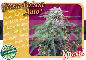 Green Poison Auto (Sweet Seeds) 0