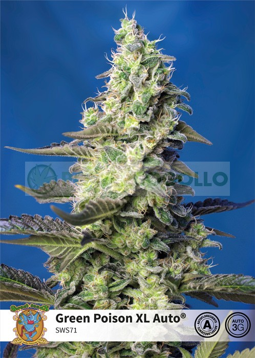 Green Poison XL Auto (Sweet Seeds) 25 Semillas Feminizadas 0