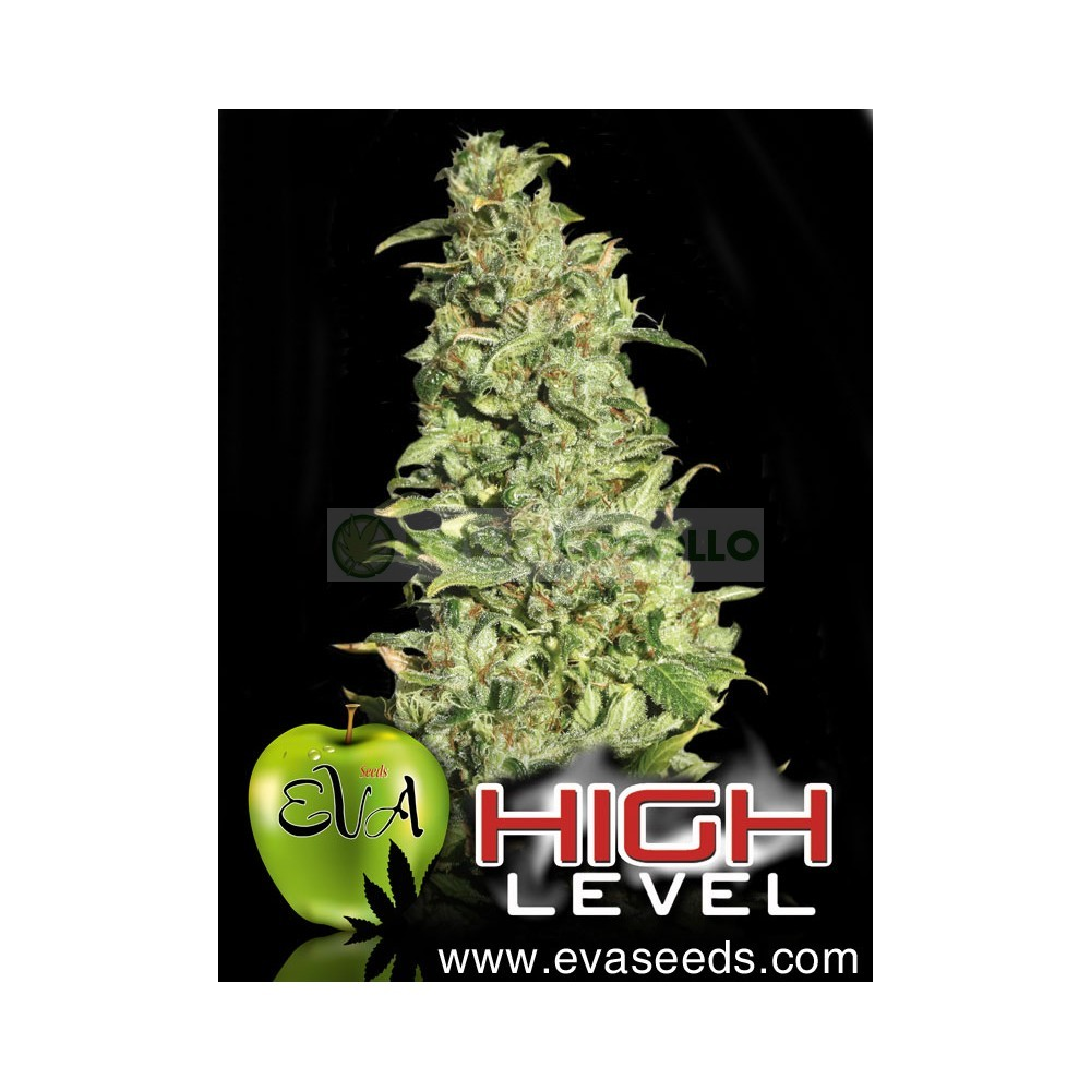 High Level (EVA SEEDS) 2