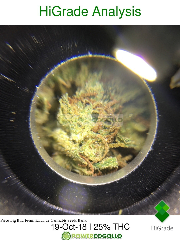 HIGRADE MICROSCOPIO ANALIZADOR DE THC 3